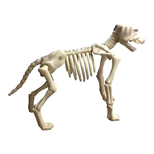 Ovedcray Costume series Large Skeleton Dog Prop Puppy Bones Halloween -