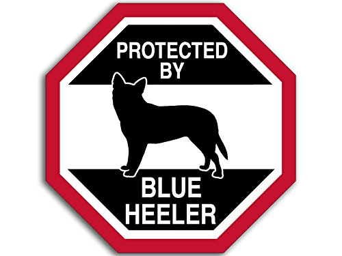 octangular protected by blue heeler sticker funny