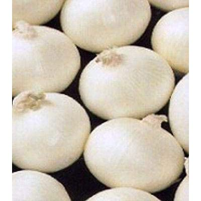 White Bermuda Onion - Heirloom variety from 1898 - Satiny White, Sweet Globes (50 - Seeds) : Garden & Outdoor