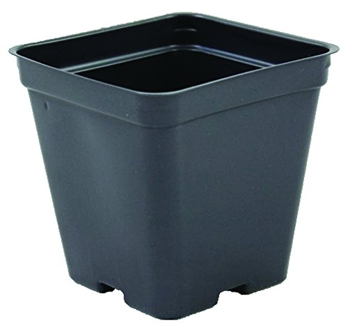 Square Greenhouse Pots 3.5 inch x 3.5 inch- Black - Plastic - Deep - Case of 450 by Growers (Square Greenhouse Pots)