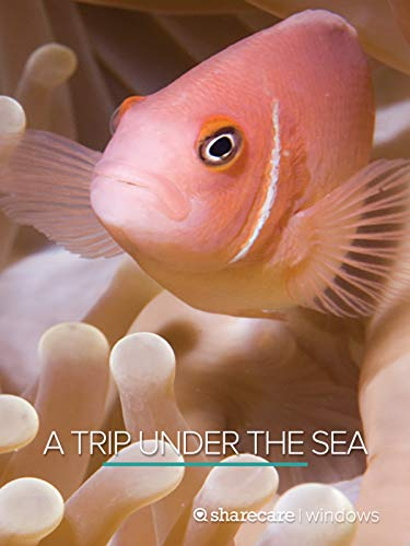 A Trip Under the Sea best to buy