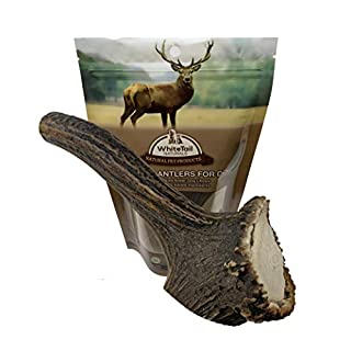 WhiteTail Naturals | Large Premium Red Deer Antler for Dogs |Organic Naturally Shed Antler Chews | Natural Organic Dog Chews for Big Breeds | Long Lasting