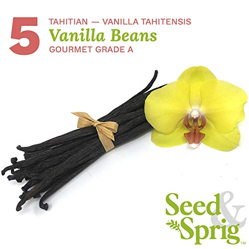 Seed & Sprig Tahitian Vanilla Beans | 5 Pack | Bulk Whole Vanilla Pods & Seeds for Baking, Coffee, Brewing, Cooking | Gourmet Grade A | 5.5+ inches Non-GMO Long, Plump, Moist
