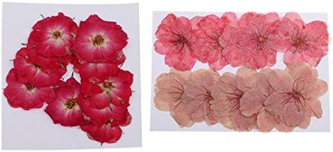 混合色 押し花 乾燥花 ローズフラワー 桜の花 手芸素材 蝋燭作り 人工アンバー作り用 添え物 20枚入り