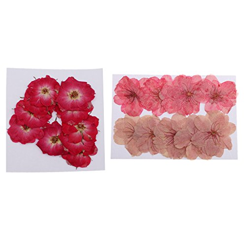 Baoblaze 20 Pieces Mixed Size Real Pressed Flowers Embellishments for Card making Scrapbooking Handmade Art Crafts Phone Case Real Press Sakura Cherry Blossom and Red Rose Flower