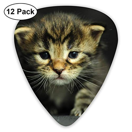 V5DGFJH.B Cats Kittens Dressed Up Classic Guitar Pick Player's Pack for Electric Guitar,Acoustic Guitar,Mandolin,Guitar -