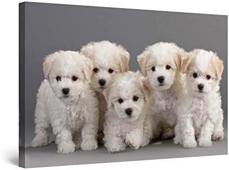 Startonight Wall Art Canvas Bichon Puppie