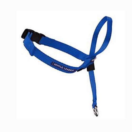 Gentle Leader Quick Release Head Collar, Small, Royal Blue, My Pet Supplies