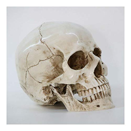 EP_ Life Size Human Anatomy Resin Replica Skull Head Halloween Party Decor Wide