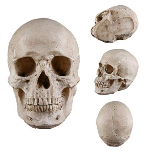 Party Diy Decorations - Halloween Skull Replica Scary Horrible Decoration Party Beige - Cat Mini Bone Resin Hand Lifesize Halloween Model Skull -