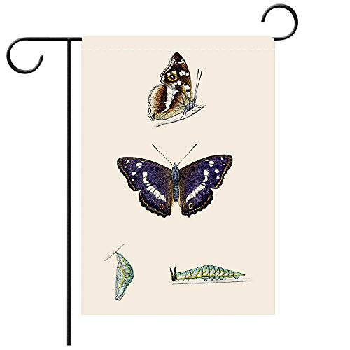 BEICICI Garden Flag Double Sided Decorative Flags Purple Emperor Hand Coloured Engraving Best for Party Yard and Home Outdoor ()
