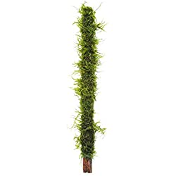 "Luffy All Natural 7"" Bamboo Moss Stick - Beautiful Aquatic Decor Safe for Freshwater Fish Tanks - Fun and Playful Aquarium Toy for Betta, Tetra, Gourami & Shrimp to Swim Around & Hide"