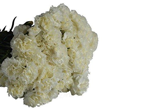 Farm-Fresh Mini Carnations in Bulk: 100 White Mini Carnations - Farm Direct Wholesale Fresh Flowers