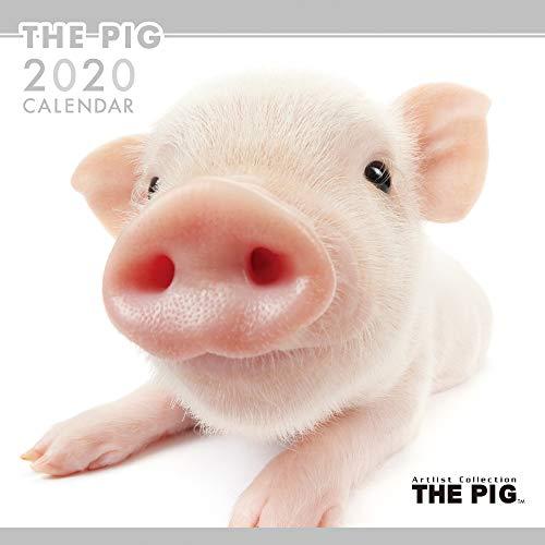 Guinea Pigs 2001 Calendar - The Pig Wall Calendar 2020