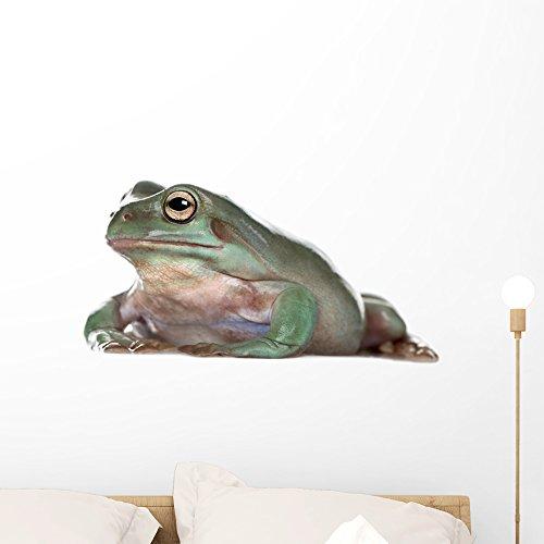 Australian Green Frogs - 8
