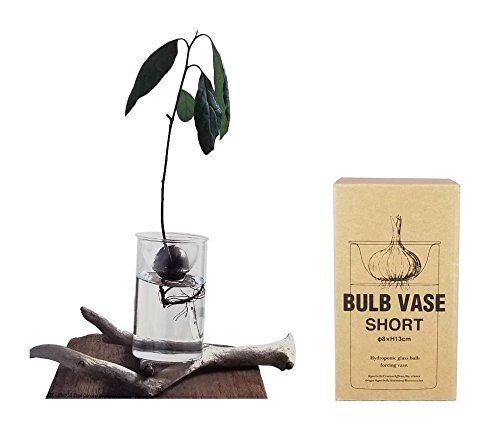 Avocado Plant Starter Kit Growing Tree from Seed, Glass Bulb Forcing Vase for Flowers, Cacti and Mosses with Basic Instruction Card (Bulb Vase Short)