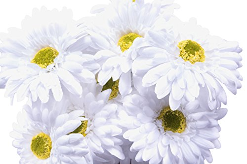 (CraftMore White Gerbera Daisy Stems 14 Inch Set of 12)