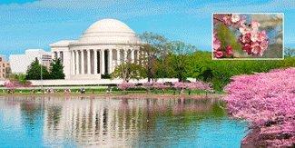 Blossoms Postcard (3D Motion Lenticular Postcard - Jefferson Memorial and Cherry Blossoms, Washington, D.C. - 4x8 Greeting Card - Oversize)