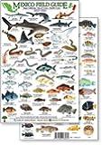 Baja, Sea of Cortez Reef Fish Field Guide