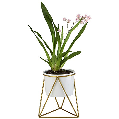 flowerplus Planter Pot Indoor, 4.33 Inch White Ceramic Medium Succulent Cactus Flower Plant Round Bowl with Metal Stand Holder and Plants Sign for Indoors Outdoor Home Garden Kitchen Decor (Indoor Planter Plant Pot)