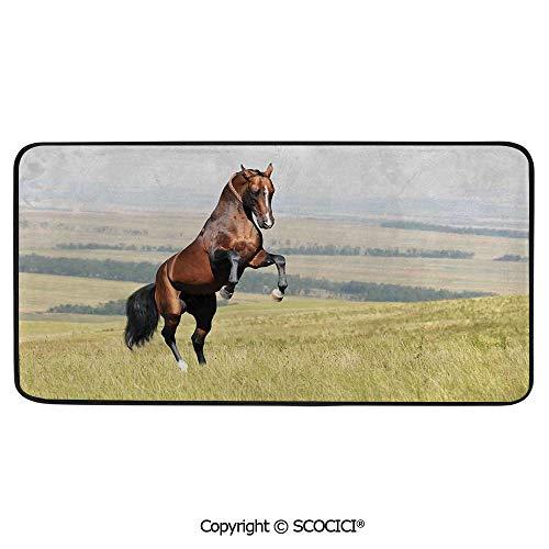 Soft Long Rug Rectangular Area mat for Bedroom Baby Room Decor Round Playhouse Carpet,Horses,Bay Akhal Teke Horse Stallion Rearing on The Field Noble,39