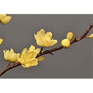 Skyseen 3Pcs Artificial Plum Blossom Branches Flowers Stems Silk Fake Wintersweet Arrangements for Home Wedding Decoration(Yellow) 2