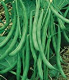 buy Contender Stringless Bush Bean-400+ Seeds-VALUE PACK! now, new 2020-2019 bestseller, review and Photo, best price $3.99
