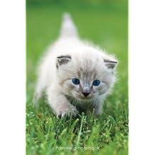 Password notebook: Medium-size internet address and password logbook / journal / diary - Blue-eyed kitten cover