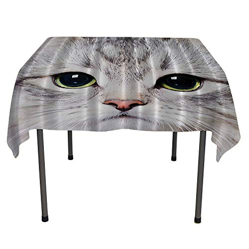 Cat Decorations Gray Cute Cat Print Kitten Kitty Closeup Portrait Picture Digital Photography Lovely Pet Bathroom bedside table tablecloth table cloth for kitchen Spring/Summer/Party/Picnic 50 By 80