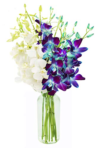 - KaBloom Starry Night in the Tropics Bouquet of Blue and White Orchids from Thailand with Vase