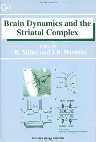 Brain Dynamics and the Striatal Complex (Conceptual Advances