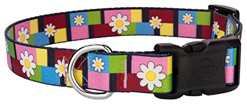 Country Brook Design | Deluxe Spring Daisies Dog Collar - Medium (Daisy Block Collar)