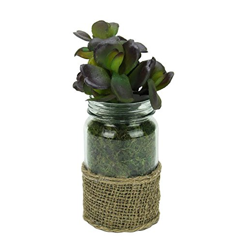 Melrose Artificial Potted Jade Succulent Plant in Glass Jar with Burlap Grip 7.5