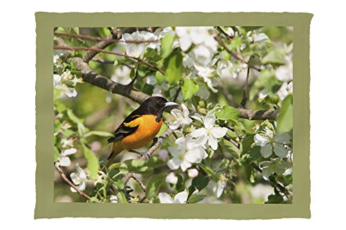 Lantern Press Baltimore Oriole - Photography A-92780 (60x80 Poly Fleece Thick Plush Blanket)