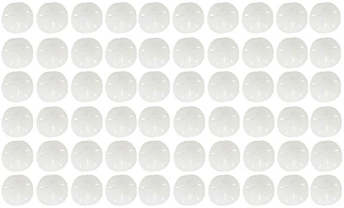 60 Round Sand Dollars .5 -.75'' | Natural Small Florida Sand Dollar Shells | Mini Tiny White Real Sand Dollars | Set of 60 | Coastal Beach Home Decor, Crafts, Weddings & More by The Seashell Company