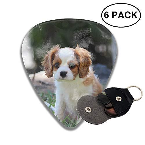 (Celluloid Guitar Picks For Bass Guitar,Print Animal King Charles Spaniel Dogs Puppy Cavalier Cute -6pcs)