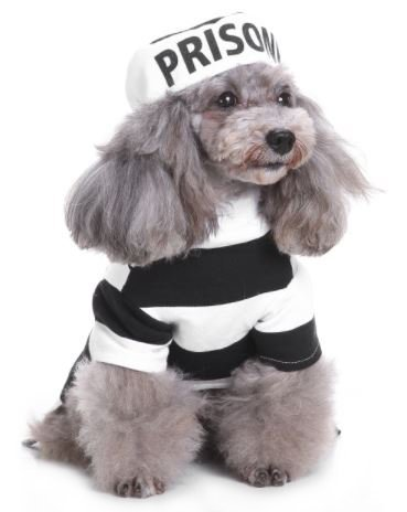 Midlee Inmate Dog Costume -
