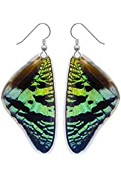 Real Butterfly Wing Earrings - Green Sunset Moth - Nature, Natural, Bugs, Insects, Taxidermy