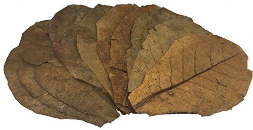 Awesome Aquatics Jumbo Betta/Shrimp Leaves 10 Premium Catappa Indian Almond Leaves Jumbo size 7-9 in natural habitat Tannin Producing improves immunity, prevents harmful bacterial growth EASY to USE by Awesome Aquatics