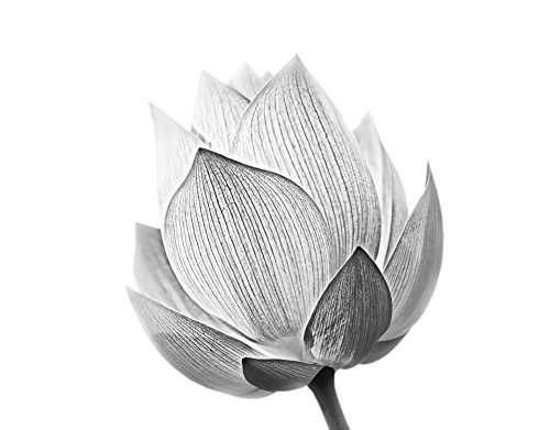 Stickerbrand Large Black and White Lotus Flower Wall Mural. Wall Decorations for -