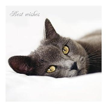 Katzen Schutz Karte Guten Morgen Amazonde Bürobedarf