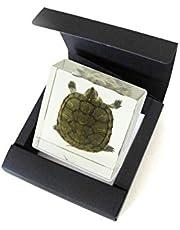Real Bug TE31 Turtle Specimen Block, Medium