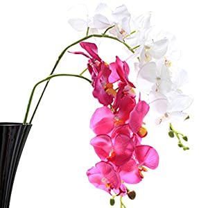 Flowers For - 1pc 78cm 6 Colors Silk Flowers Phalaenopsis Artificial Orchid Flower Decoration Decorative - Hibiscus That Outdoor Basket Jasmine Stems Champagne Kids Vines Variety Lilies Popp 19