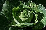 All Season Cabbage Seed - Heirloom Leafy Garden Greens Seeds, Bulk Seeds, 3 Gram