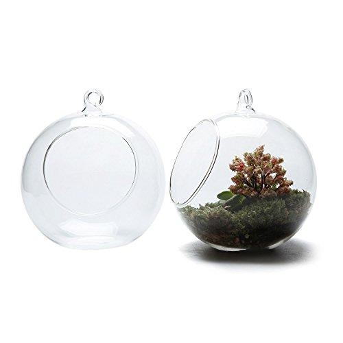 Hanging Glass Globe Terrarium Containers, 4.75