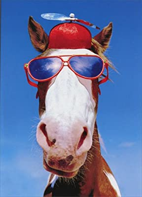 Amazon Silly Horse With Hat And Sunglasses Funny Birthday Card Office Products