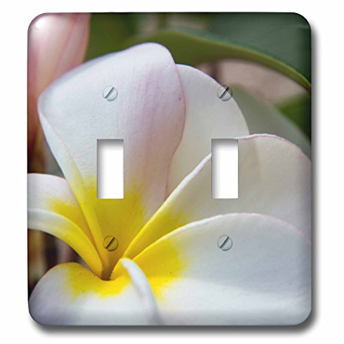 3dRose Danita Delimont - Flowers - USA, Hawaii, Oahu, Tropical Garden with Plumeria flowers - Light Switch Covers - double toggle switch (lsp_278960_2) by 3dRose