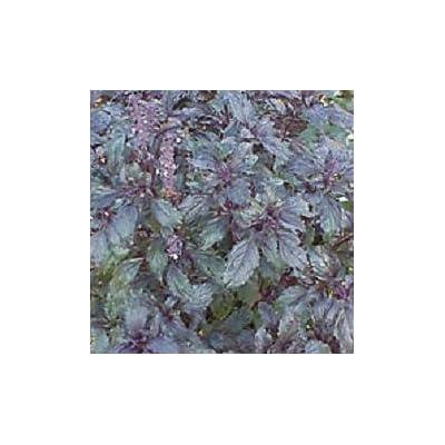 Basil Aromatto Ocimum basilicum 1,000 seeds: Home & Kitchen