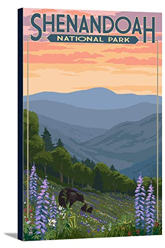 Shenandoah National Park, Virginia - Black Bear and Cubs Spring Flowers (24x36 Gallery Wrapped Stretched Canvas)