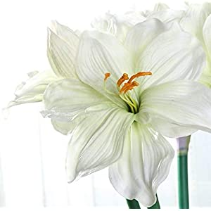 Floral Kingdom Real Touch 30' XLarge Artificial Amaryllis Flowers for vase Arrangements, Home/Office Decor (Pack of 3) (Cool White) 3
